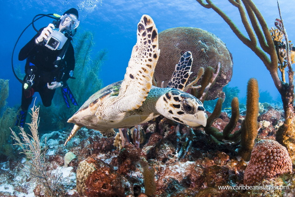 Diving on coral reef in bonaire