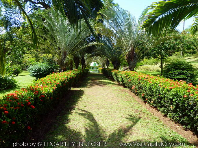 Botanical Garden of Kingstown