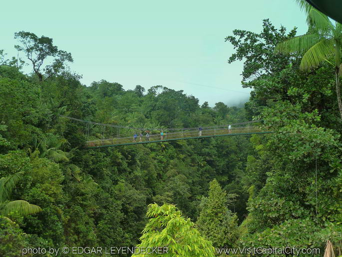 Suspension Bridge in the Rainforest Roseasu